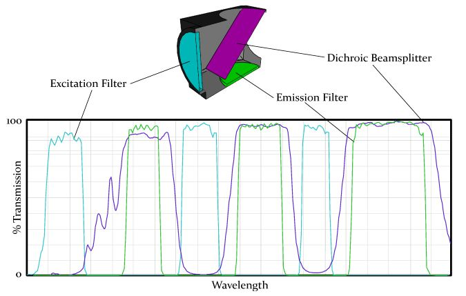 One filter configuration is a set including a multiband exciter, multiband dichroic, and multiband emission filter. Each filter can be created to selectivly transmit and block multiple bands of wavelengths. This configuration requires the user to use a color CCD camera and simultaneously capture multiple fluorochromes present in a sample with a single image.